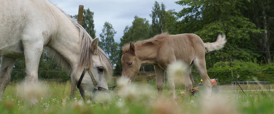 Barbäcks Lillgård hästar